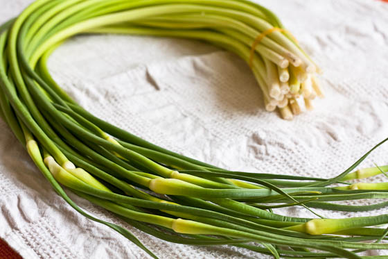 Garlic Scape long