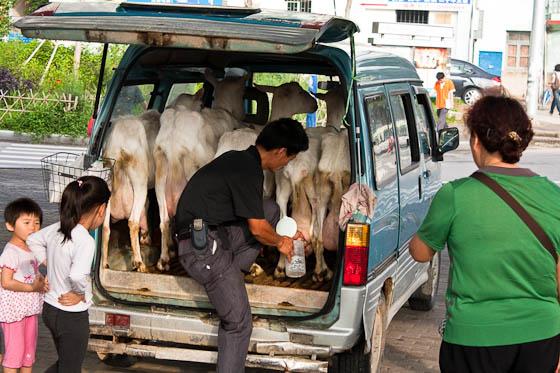 Goat Man Van